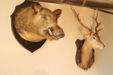 鹿肉・猪肉販売の一本松